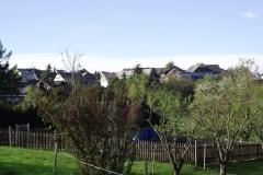 Dorfwiese
